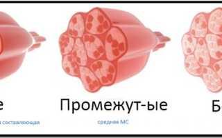 Волокна мышц