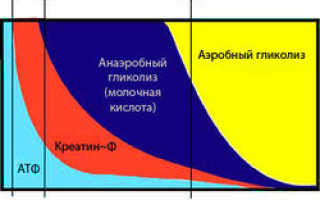 Процесс образования энергии во время работы мышц