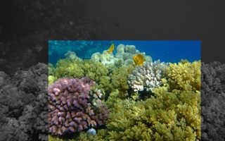 Селфи на фоне кораллового рифа, или что такое снорклинг