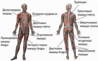 Польза плавания для мышц