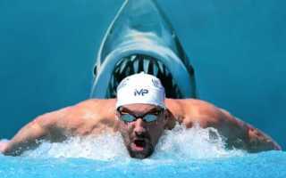 Как плавать по-собачьи: техника, польза этого стиля плавания и как ему научиться самостоятельно